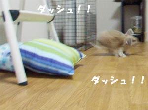 sakura200609-6.jpg