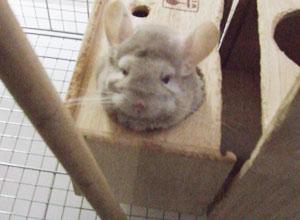 toro2006-11-2.jpg