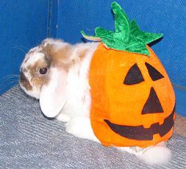 かぼちゃパンツ