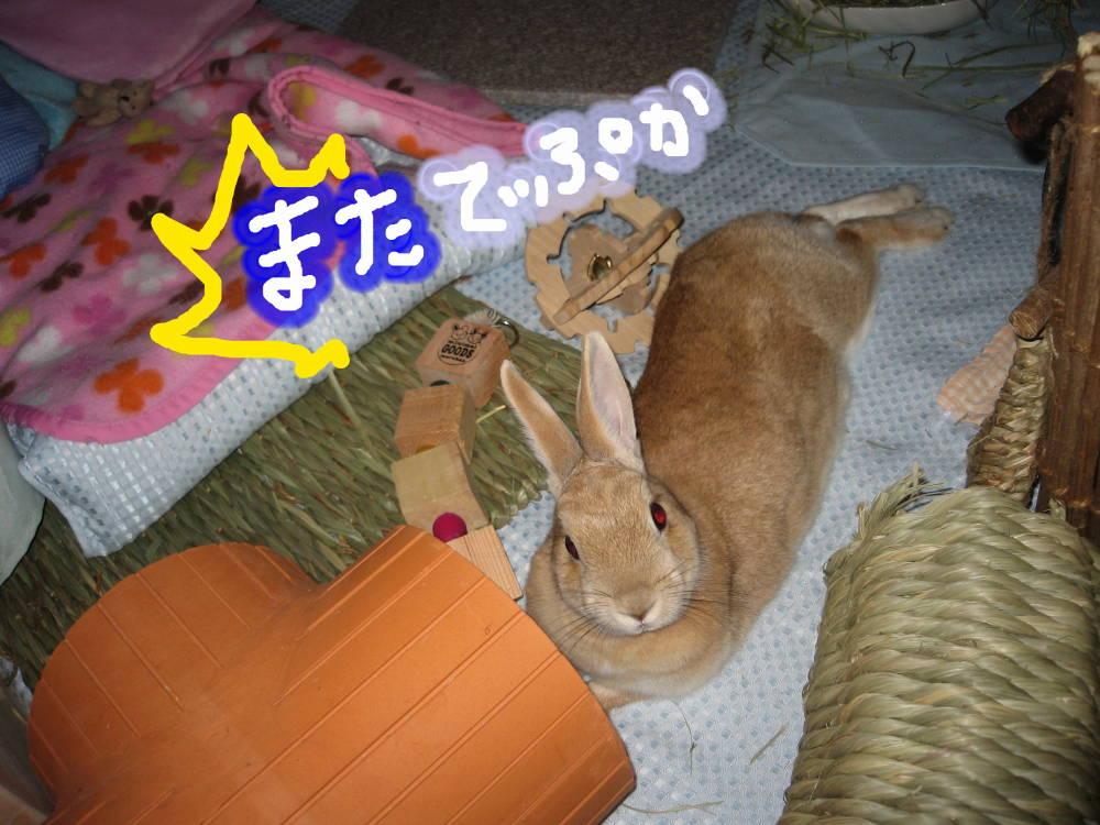 はっ!ゆうたんでぷ!!