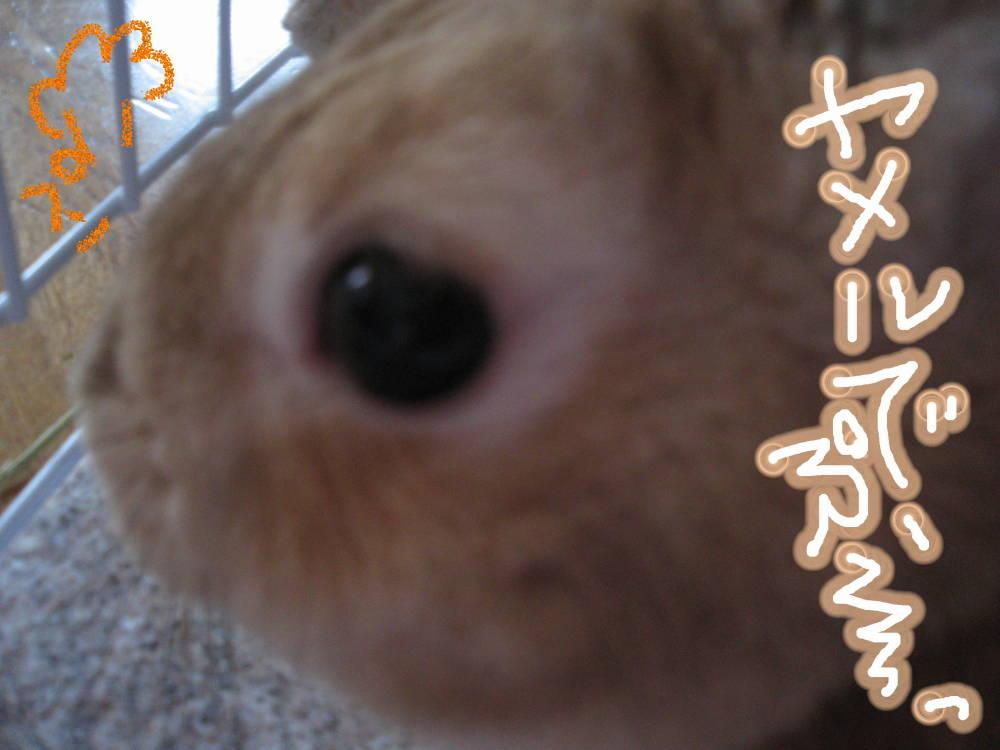 やめるでぷ〜!!