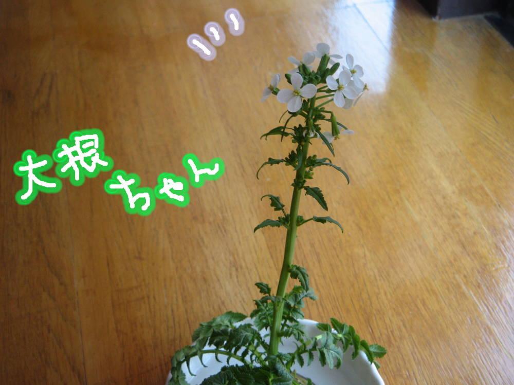 お花かわいいな〜っ