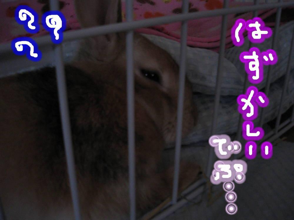 ゆうたんのばかぁ〜でぷ!!