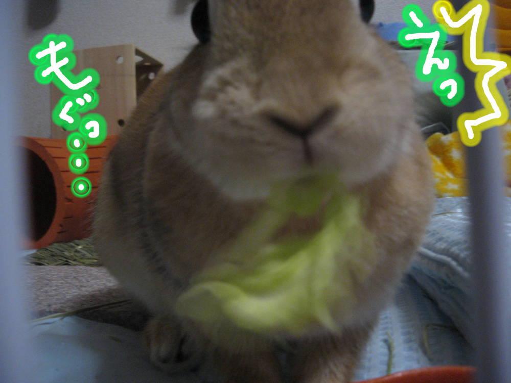 ほんとうでぷか!?