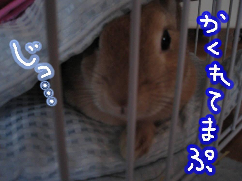 かくれんぼでぷ〜…